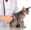 Ветеринарные клиники в Сернуре
